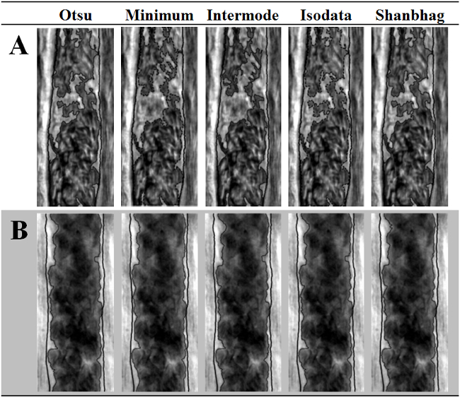 Visualization and Quantification of the Cell-free Layer in