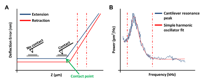 Measuring the Stiffness of Ex Vivo Mouse Aortas Using Atomic Force