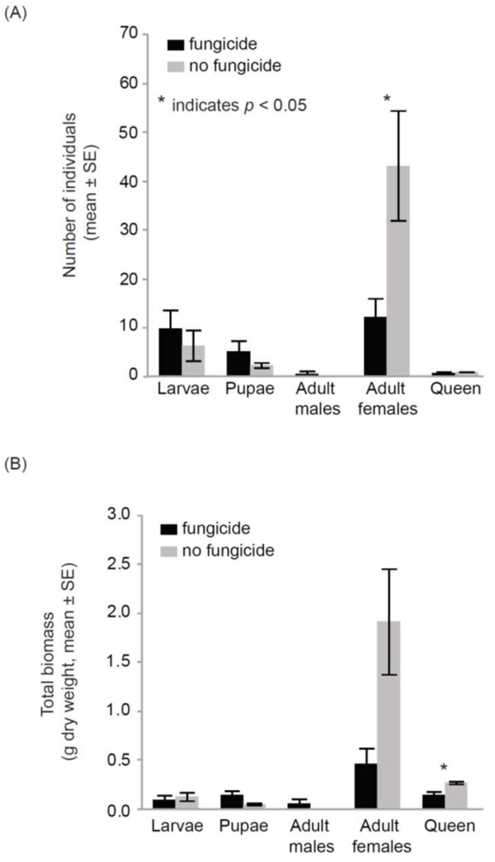 d2427b532b2 Figure 4  Impacts of fungicide residue on bumble bees in cage experiment.  Bumble bee colonies that were exposed to fungicide residues on pollen  exhibited ...