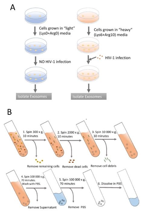 SILAC Based Proteomic Characterization of Exosomes from HIV