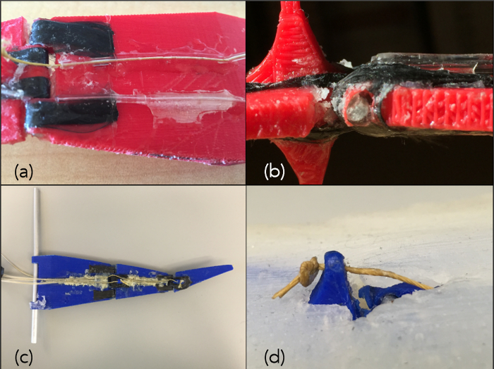 A Robotic Platform to Study the Foreflipper of the