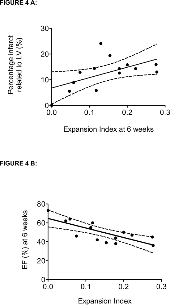 Histological Quantification Of Chronic Myocardial Infarct In Rats