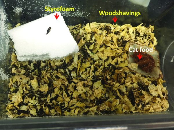 f5f071ecfcd05 وأظهرت صورة نموذجية D. المبقعة الحشرات القفص. وتنتشر نجارة الخشب للسماح  للالخنافس تخفي. وأضاف القط الغذاء في طبق بيتري صغير أو وزنها القارب.