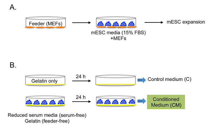 Collection of Serum- and Feeder-free Mouse Embryonic Stem