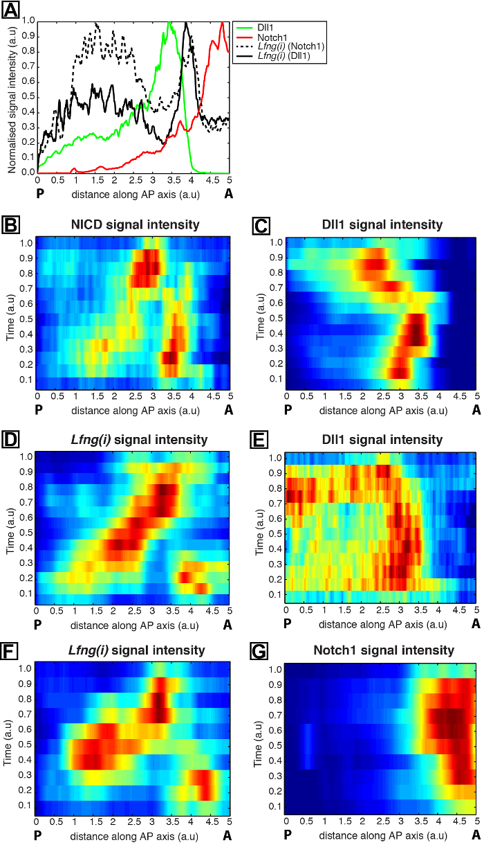 8ca3a9f54b0 Temporal Ordering of Dynamic Expression Data from Detailed Spatial ...