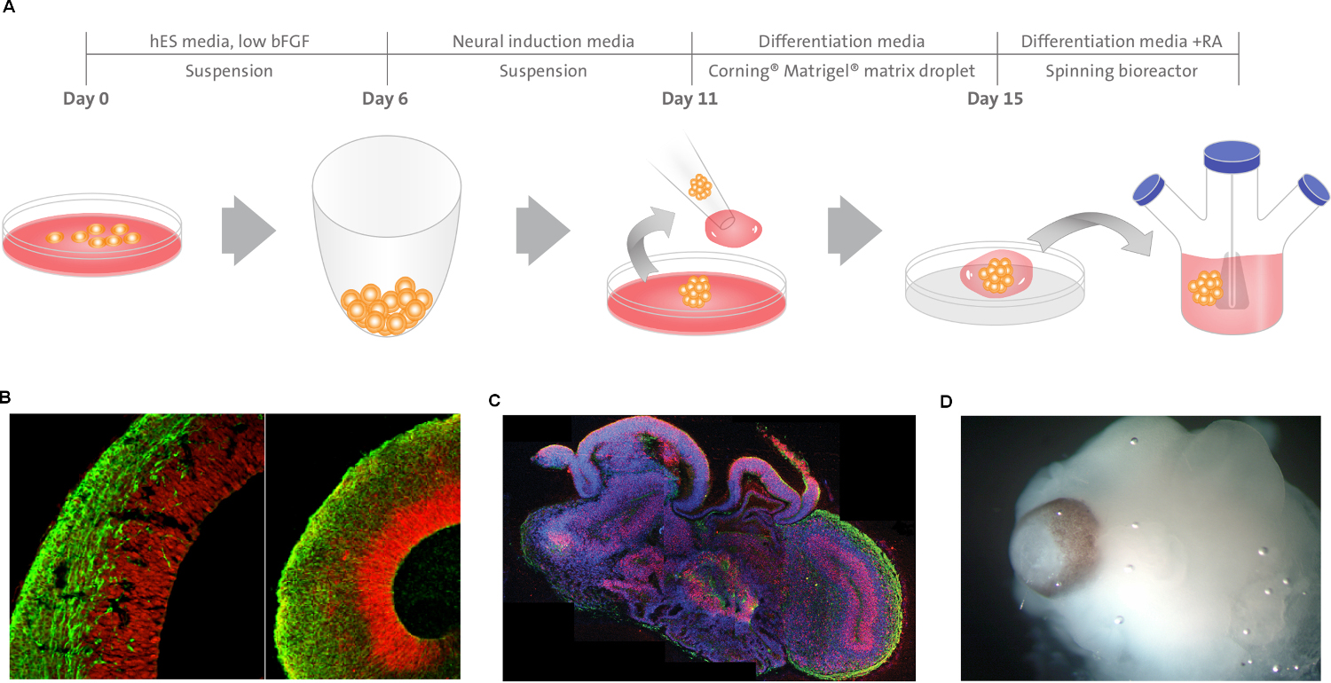 3D Tissue Engineered Systems for Regenerative Approaches, Drug