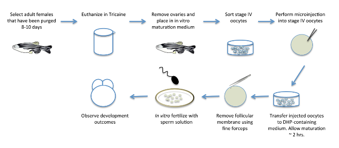 Final, sorry, direct oocyte sperm transfer consider