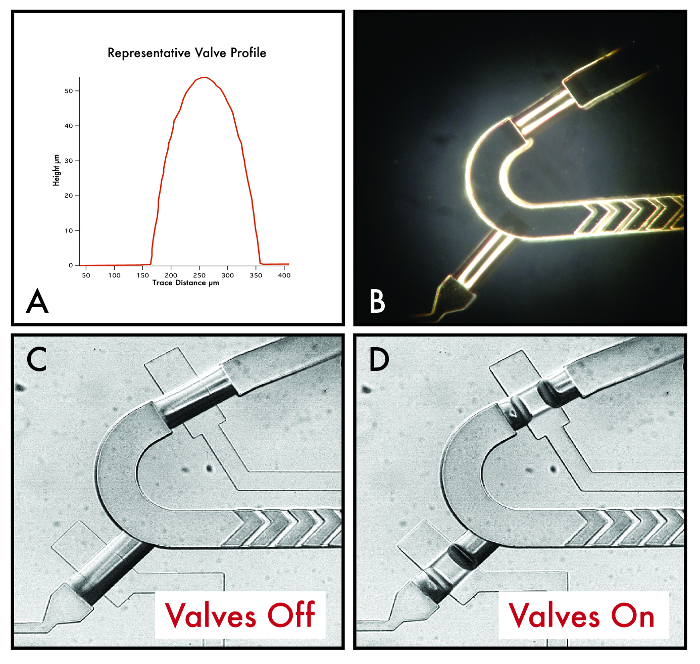 Multi-step Variable Height Photolithography for Valved