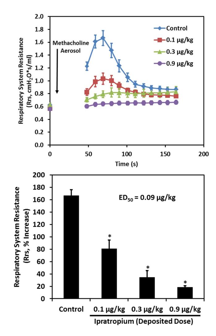 Dry Powder and Nebulized Aerosol Inhalation of Pharmaceuticals