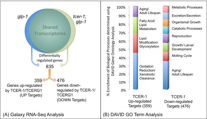 Transcriptomic Analysis of C  elegans RNA Sequencing Data
