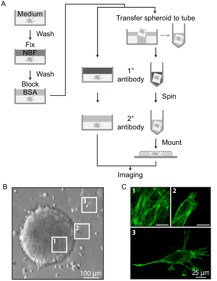 An Efficient And Flexible Cell Aggregation Method For 3d Spheroid