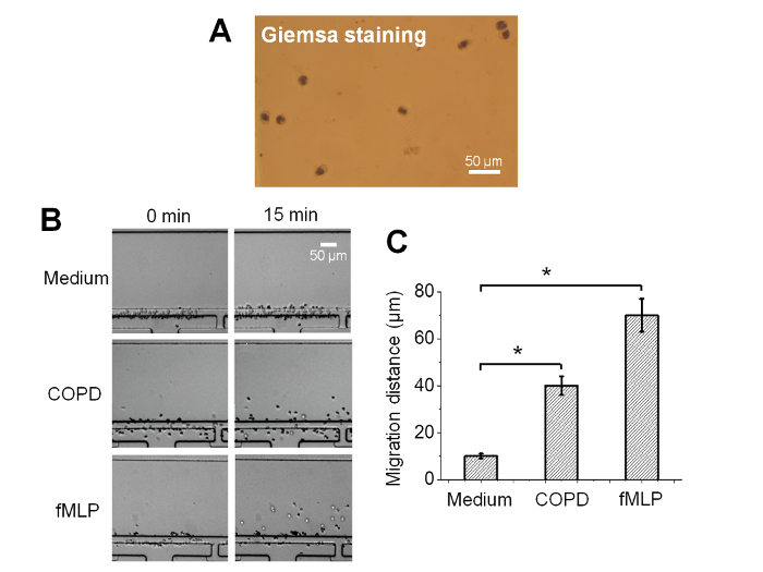 An All-on-chip Method for Rapid Neutrophil Chemotaxis Analysis