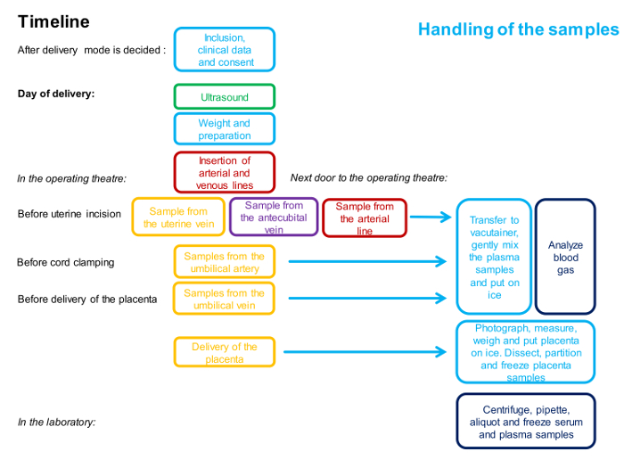 The 4-vessel Sampling Approach to Integrative Studies of