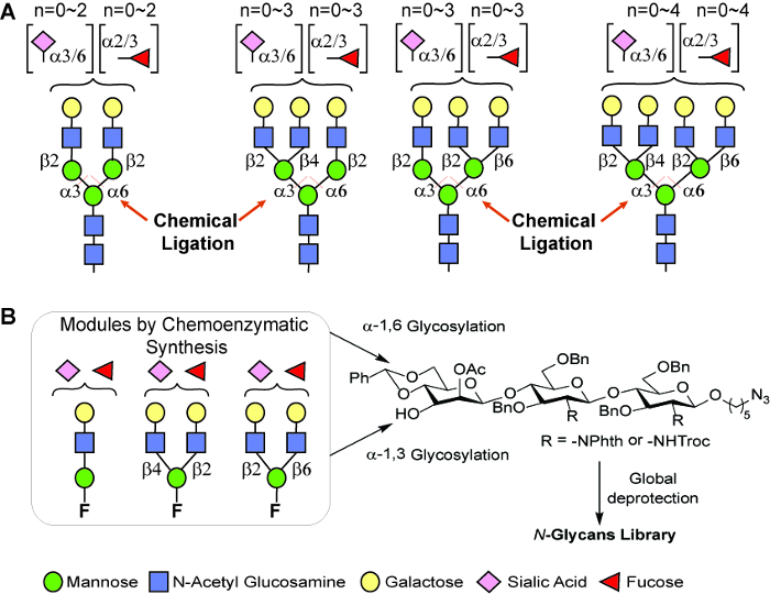 Chemo Enzymatic Synthesis Of N Glycans For Array Development