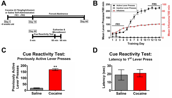 A Protocol for Measuring Cue Reactivity in a Rat Model of