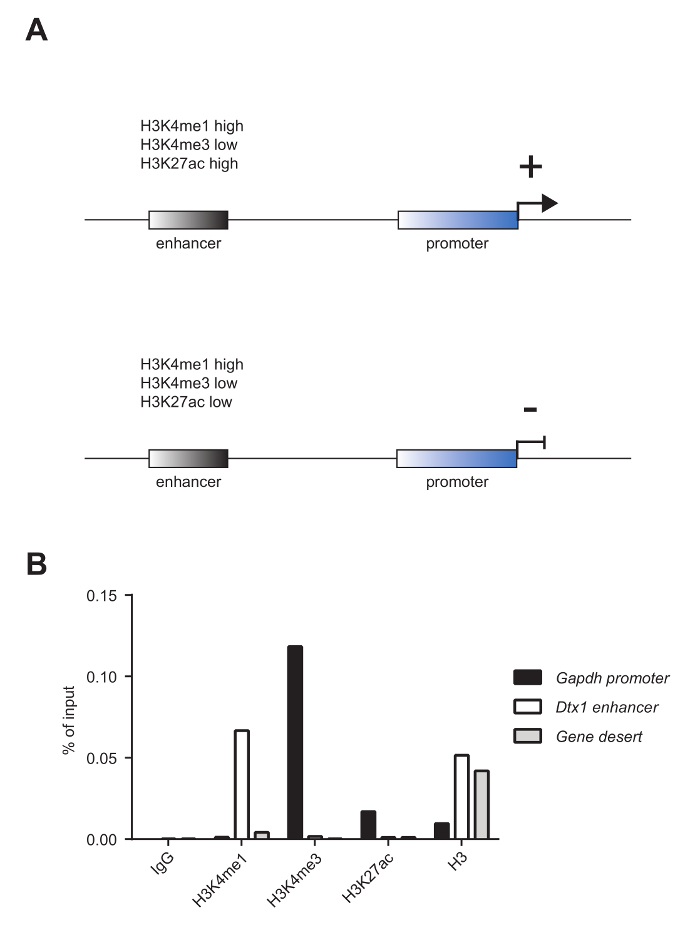 Chromatin Immunoprecipitation (ChIP) in Mouse T-cell Lines | Protocol