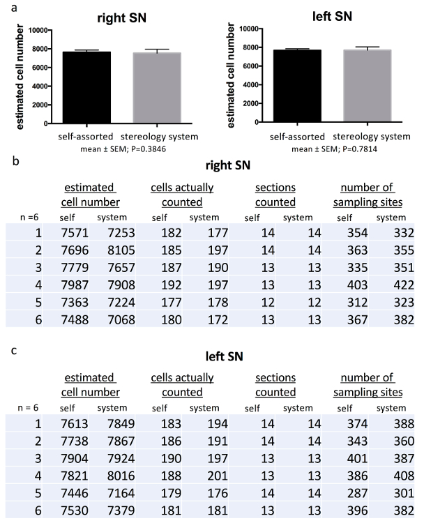 Stereological Estimation of Dopaminergic Neuron Number in