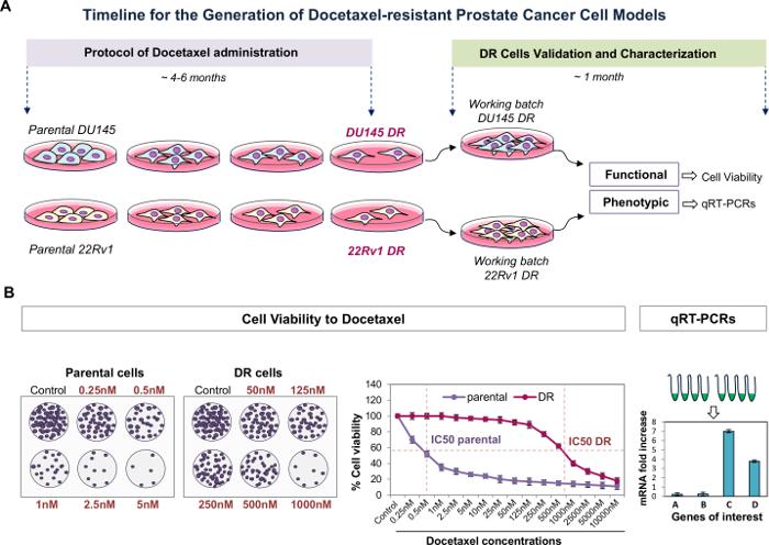 Taxol utilizado para el cáncer de próstata