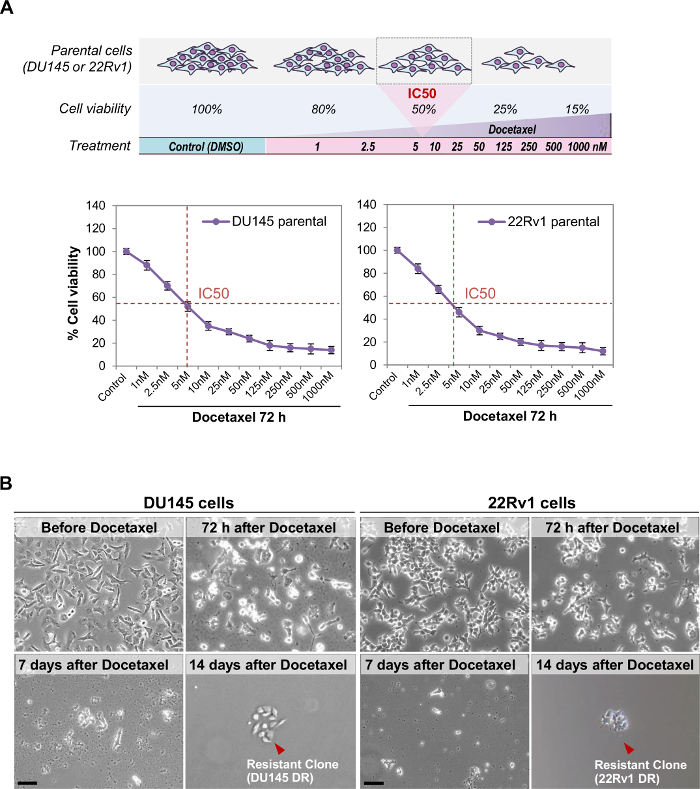 Generation Of Prostate Cancer Cell Models Of Resistance To