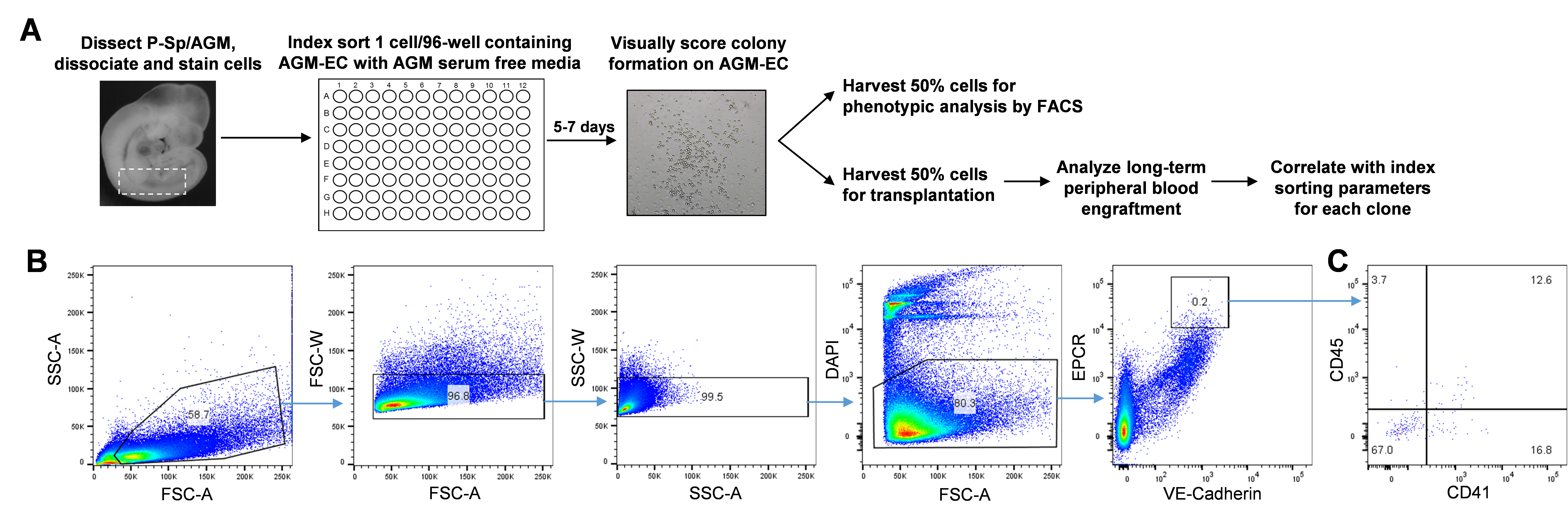 Clonal Analysis Of Embryonic Hematopoietic Stem Cell Precursors