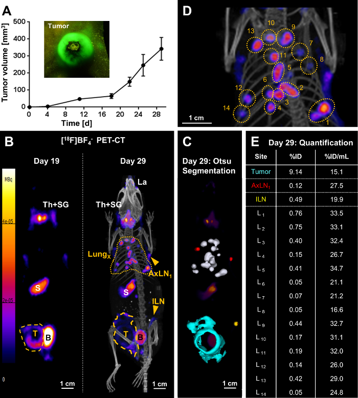 Radionuclide-fluorescence Reporter Gene Imaging to Track