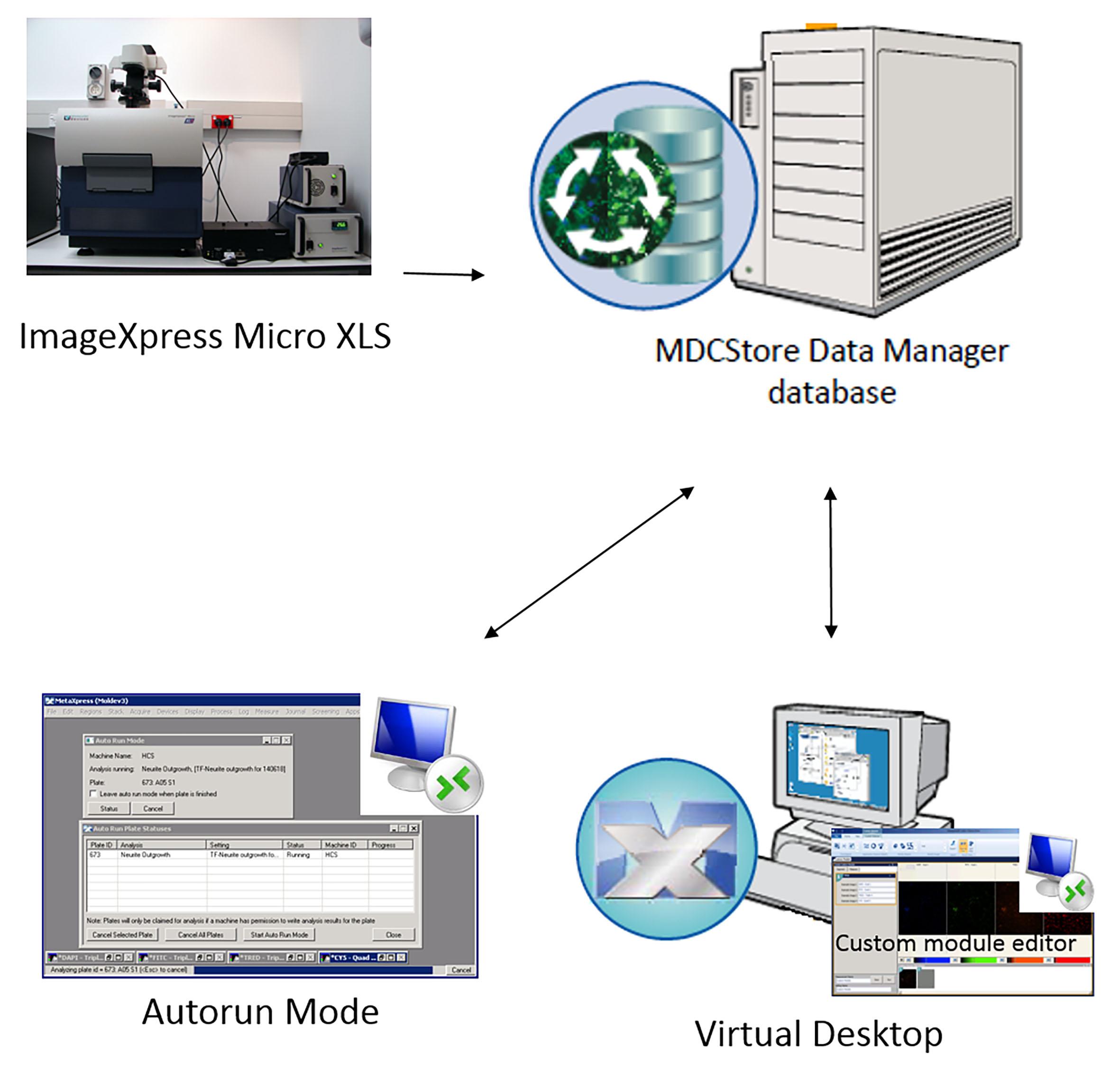 Visualization And Quantification Of Mesenchymal Cell Adipogenic