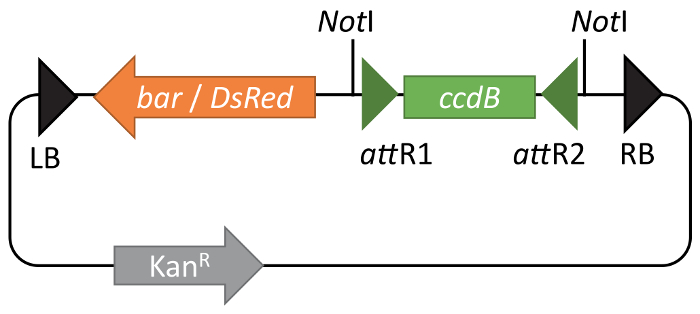 Generating Transgenic Plants with Single-copy Insertions