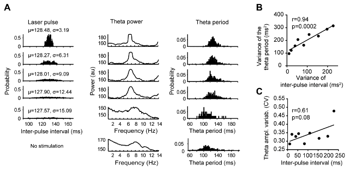 Optogenetic Entrainment of Hippocampal Theta Oscillations in