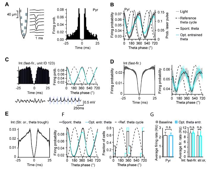 eba93a4f3 (A) atividade celular foi gravada usando sondas de silicone (esquema).  Interneurônios único e células piramidais foram isoladas e identificadas de  acordo ...