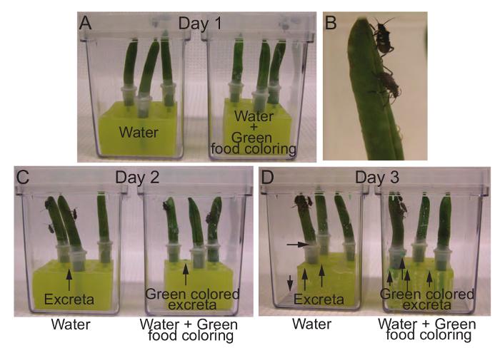 Carbon dating methode van het vinden van de leeftijd van een plant part time dating website