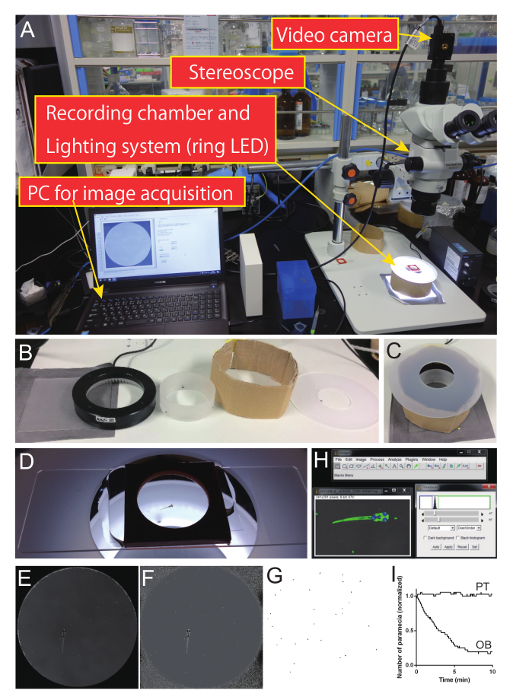 Ablation of a Neuronal Population Using a Two-photon Laser