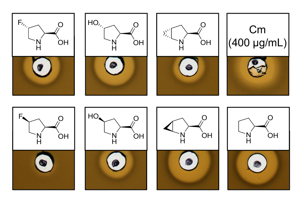Antimicrobial Peptides Produced by Selective Pressure
