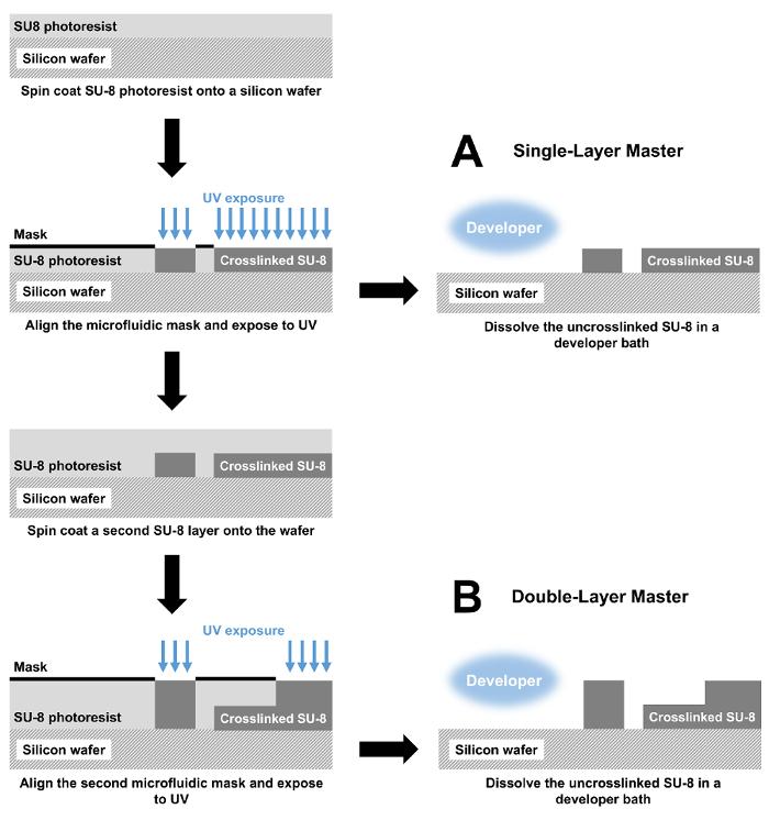 An Ultrahigh-throughput Microfluidic Platform for Single