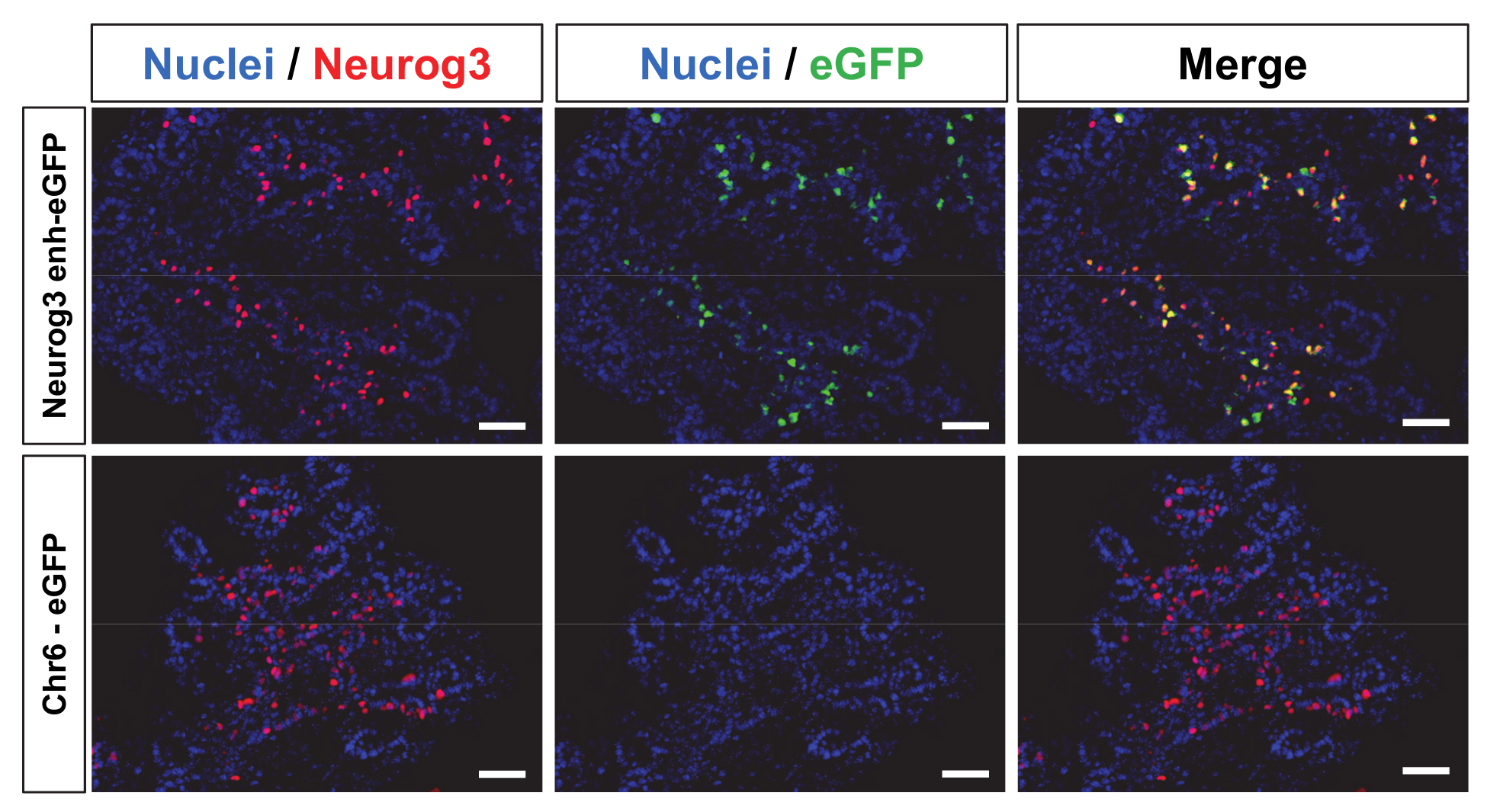 Lentiviral Mediated Production Of Transgenic Mice A Simple And