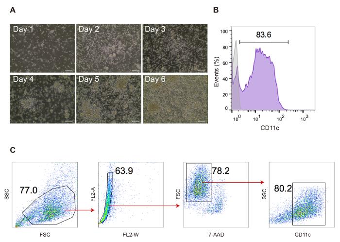 Development and Functional Characterization of Murine Tolerogenic