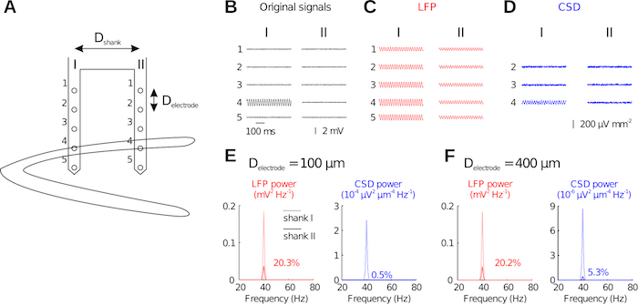 Recording Spatially Restricted Oscillations in the Hippocampus of