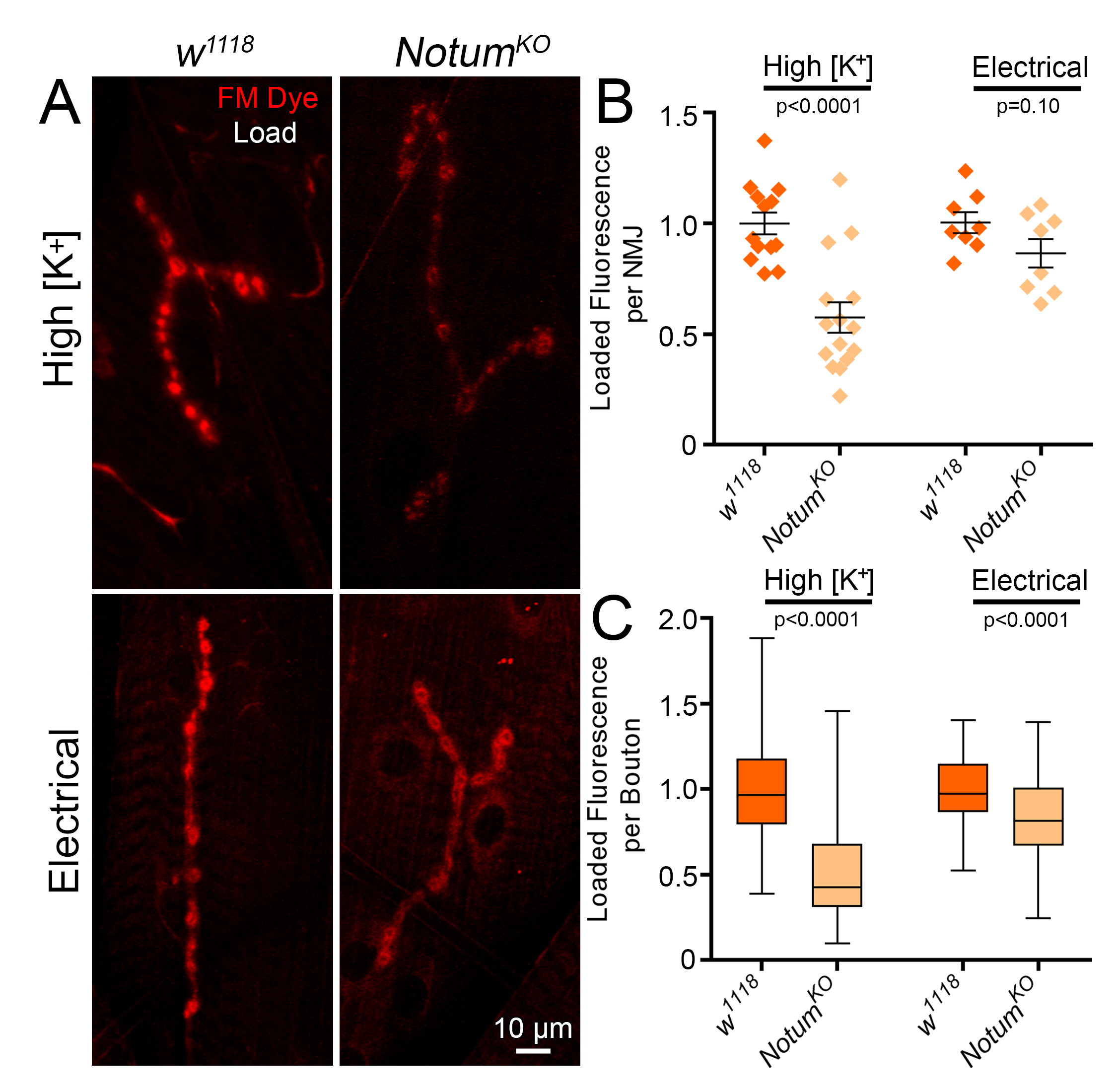 FM Dye Cycling at the Synapse: Comparing High Potassium