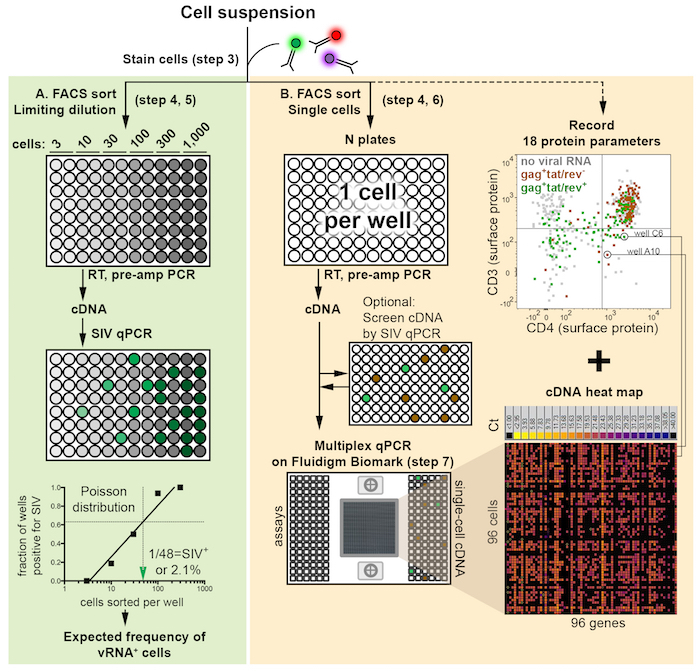 Single-cell Quantitation of mRNA and Surface Protein