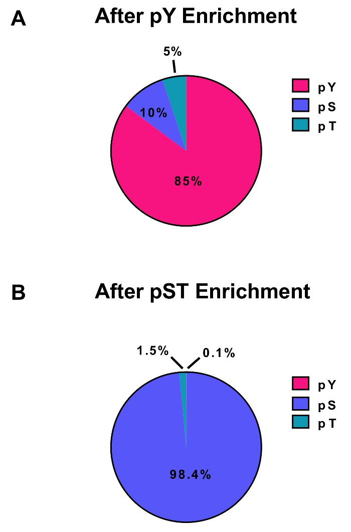 próstata con 6 muestras de vidrio 3 3 3 4