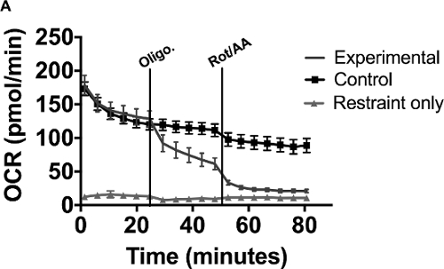 Metabolic Analysis of Drosophila melanogaster Larval and