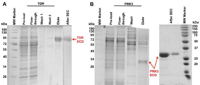 Modifying Baculovirus Expression Vectors to Produce Secreted