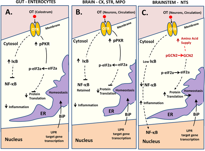 Assessing Cellular Stress and Inflammation in Discrete