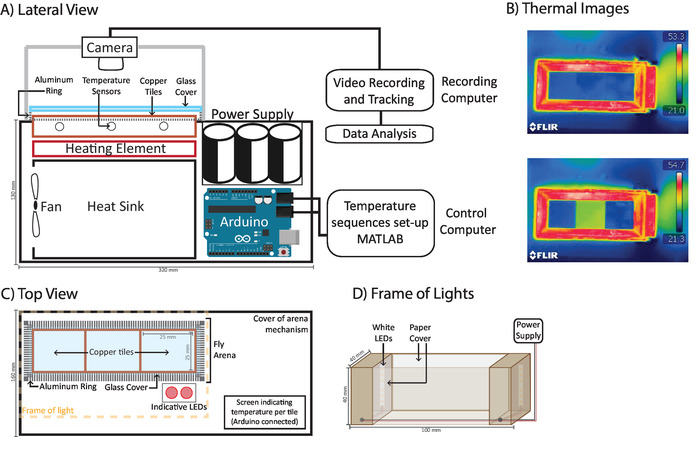 An Automated Method to Determine the Performance of Drosophila in