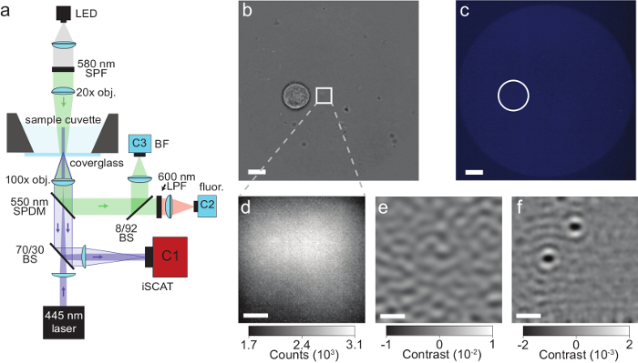 Label-Free Imaging of Single Proteins Secreted from Living