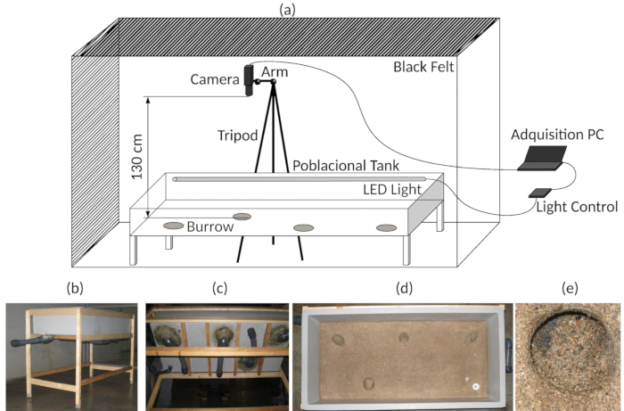 Long-term Video Tracking of Cohoused Aquatic Animals: A Case