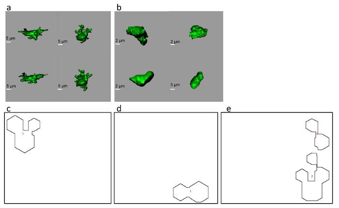 Morphology-Based Distinction Between Healthy and Pathological Cells