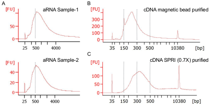 Single-cell RNA Sequencing of Fluorescently Labeled Mouse