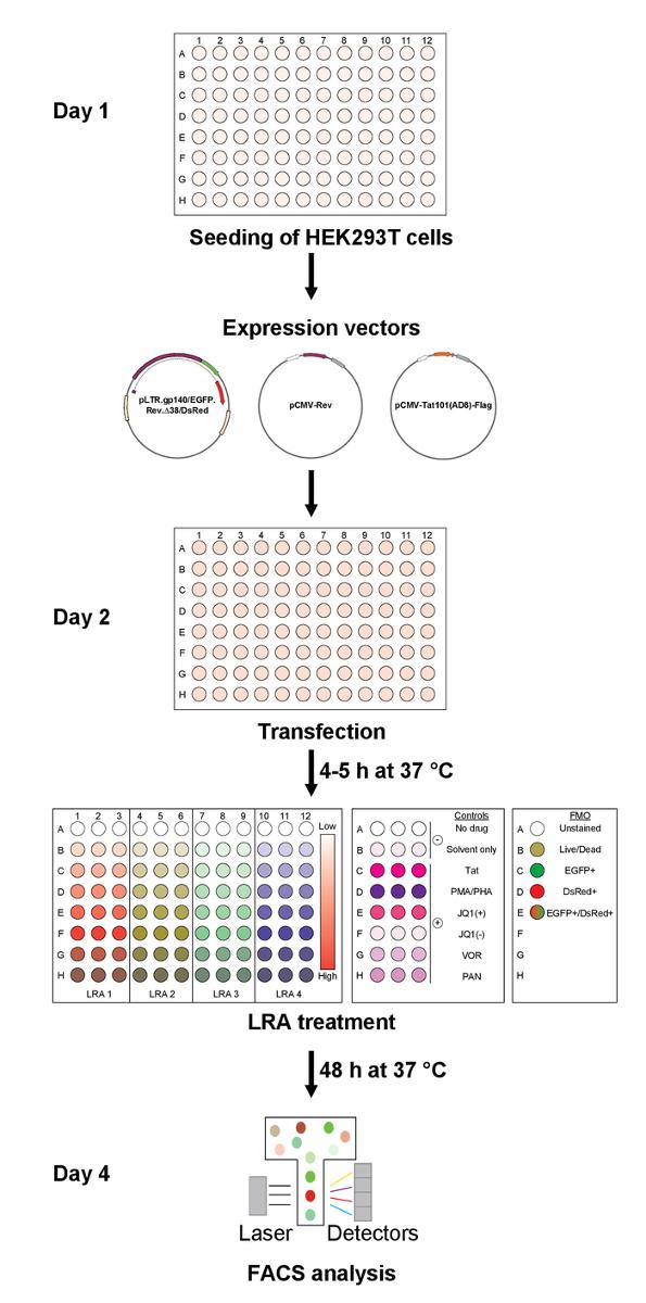 High Throughput In Vitro Assessment of Latency Reversing