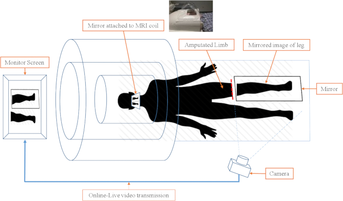 Real-time Video Projection in an MRI for Characterization of Neural