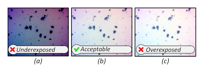 Measuring the Shape and Size of Activated Sludge Particles